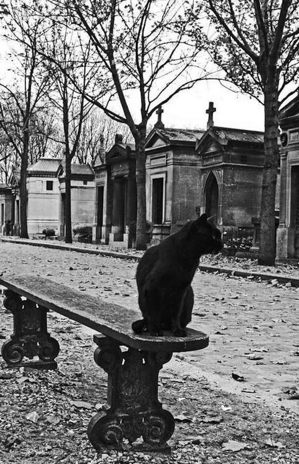 chat cimetiere paris