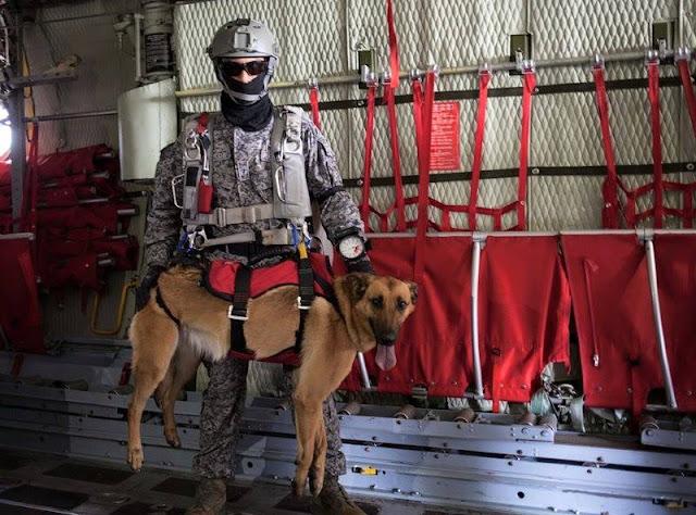 Rouss, uno de los caninos paracaidistas de la Fuerza Aérea Colombiana.