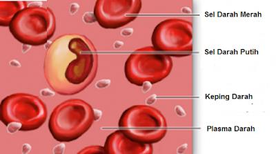 Susunan Darah dan Fungsinya