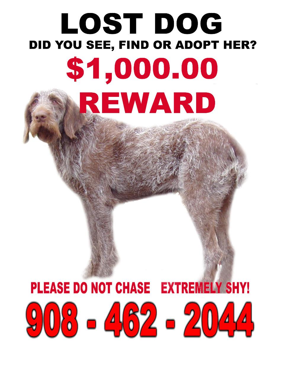 Help Bring Gina home