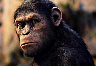 evolucion de animales