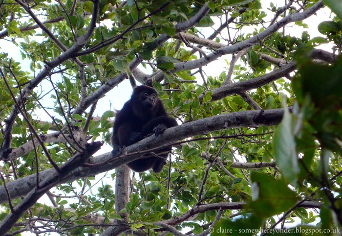 cheeky monkey - really didn't want me to take his photo. Isla de Ometepe - Nicaragua 2009