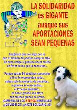 Perros en riesgo real de muerte ¡Ayuda!