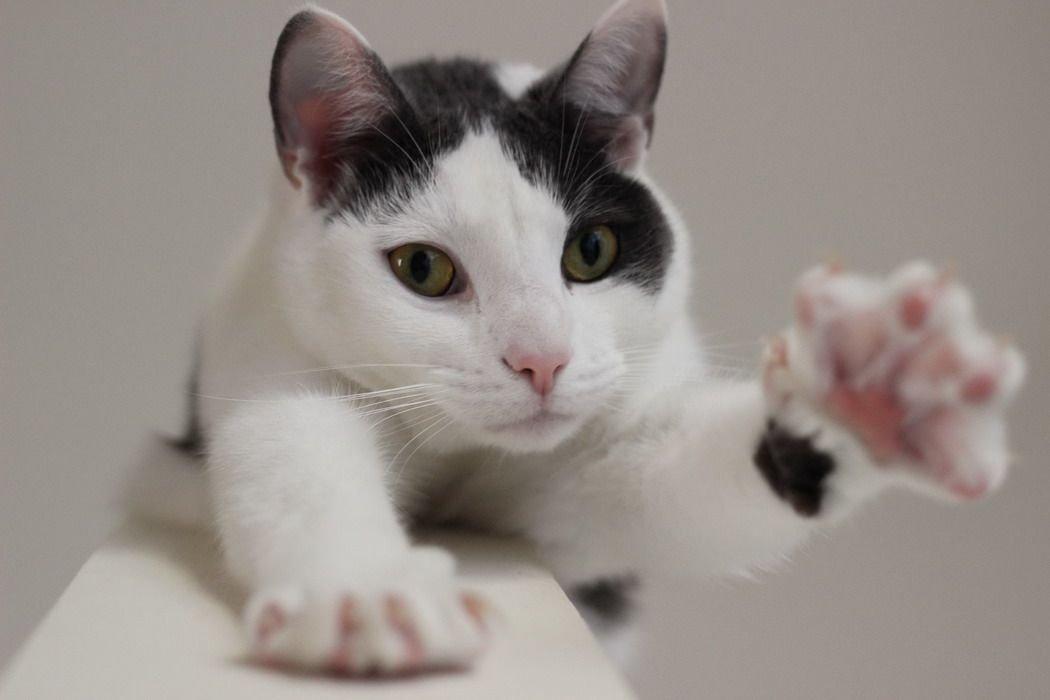 Кот вытянул лапу с когтями