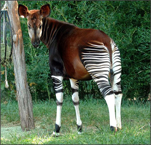 Strange animals, rare animals, unique animals, haiwan yang pelik, haiwan yang jarang dilihat, gambar kuda, kuda belang, zebra