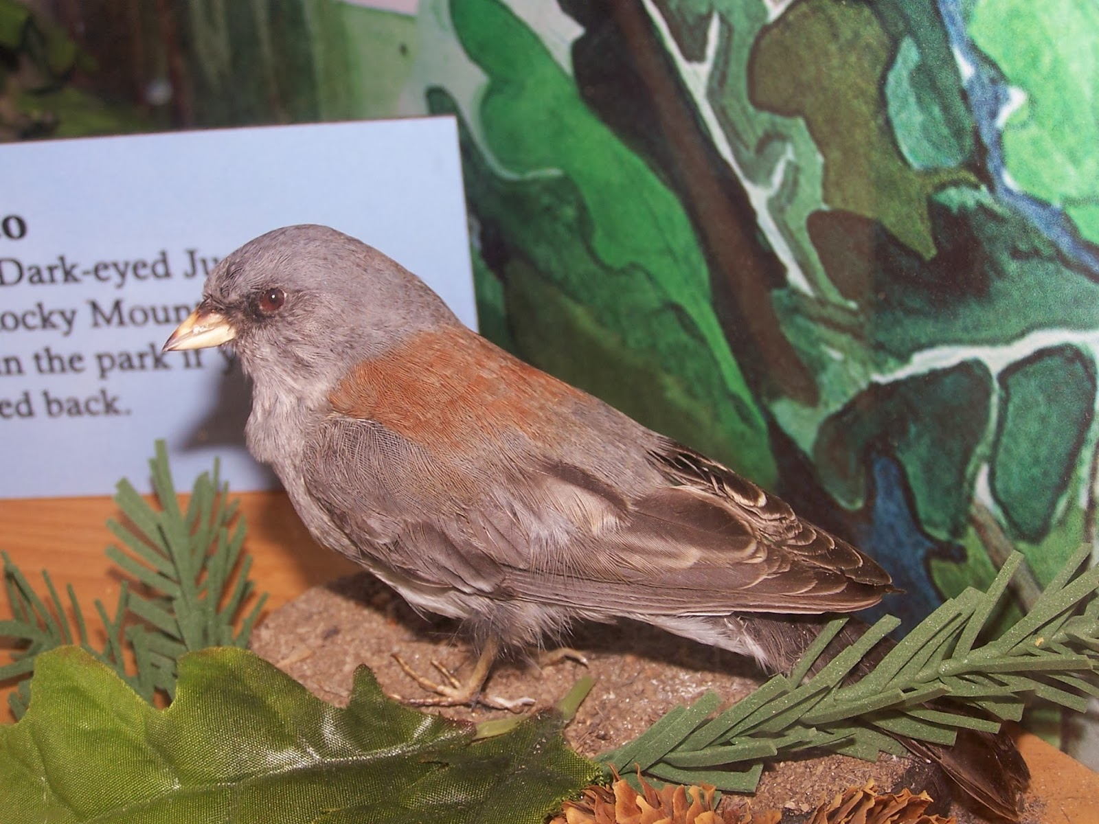 Wild Birds Unlimited | Preguntas frecuentes - Robins y Bluebirds en el invierno? | Erie, PA