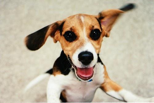 Excitement Urination Puppy