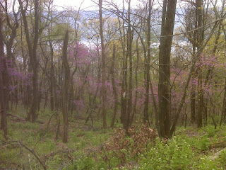 woods%2Bfull%2Bof%2Bred%2Bbuds%252C%2BSusquehanna%2BR%2Bbehind.jpg