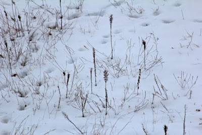 who's in this photo of Winter plants?