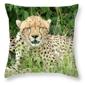 Buy Throw Pillow of Cheetah