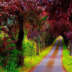 The Most Beautiful Scenery In World