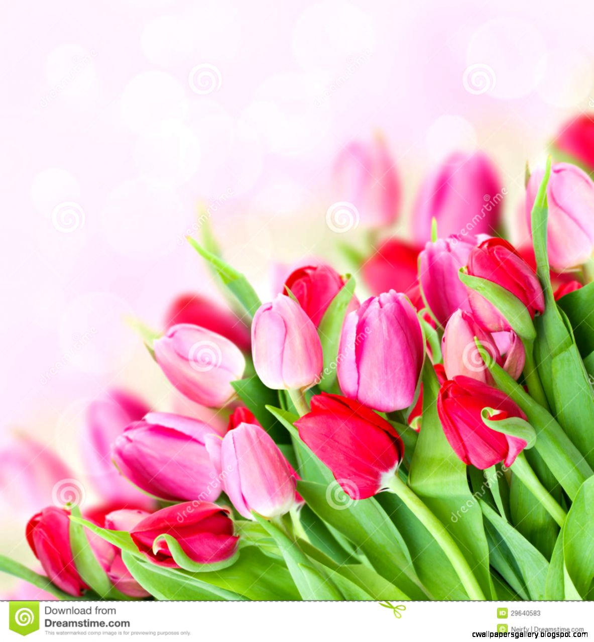 Spring Pink Tulips Bouquet Stock Photos   Image 29640583