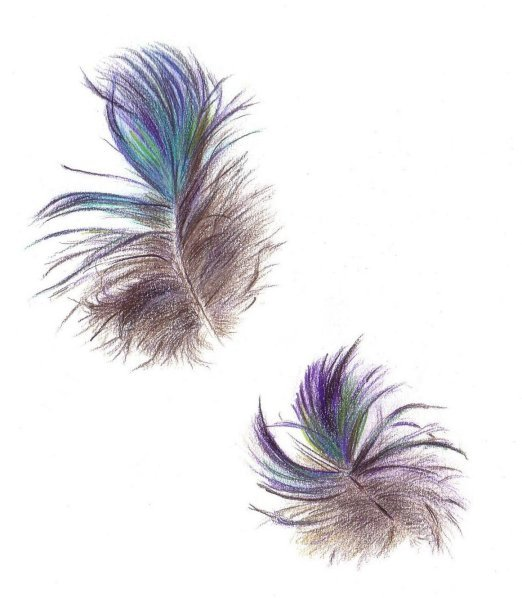 Colorful Feather Drawings