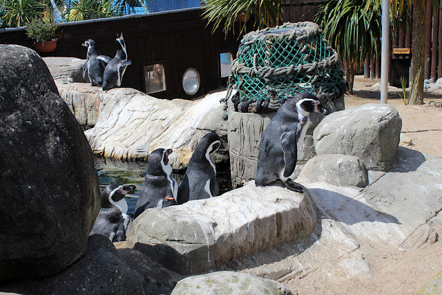 penguin-area-sealife-weymouth-sea-creatures-todaymyway.com