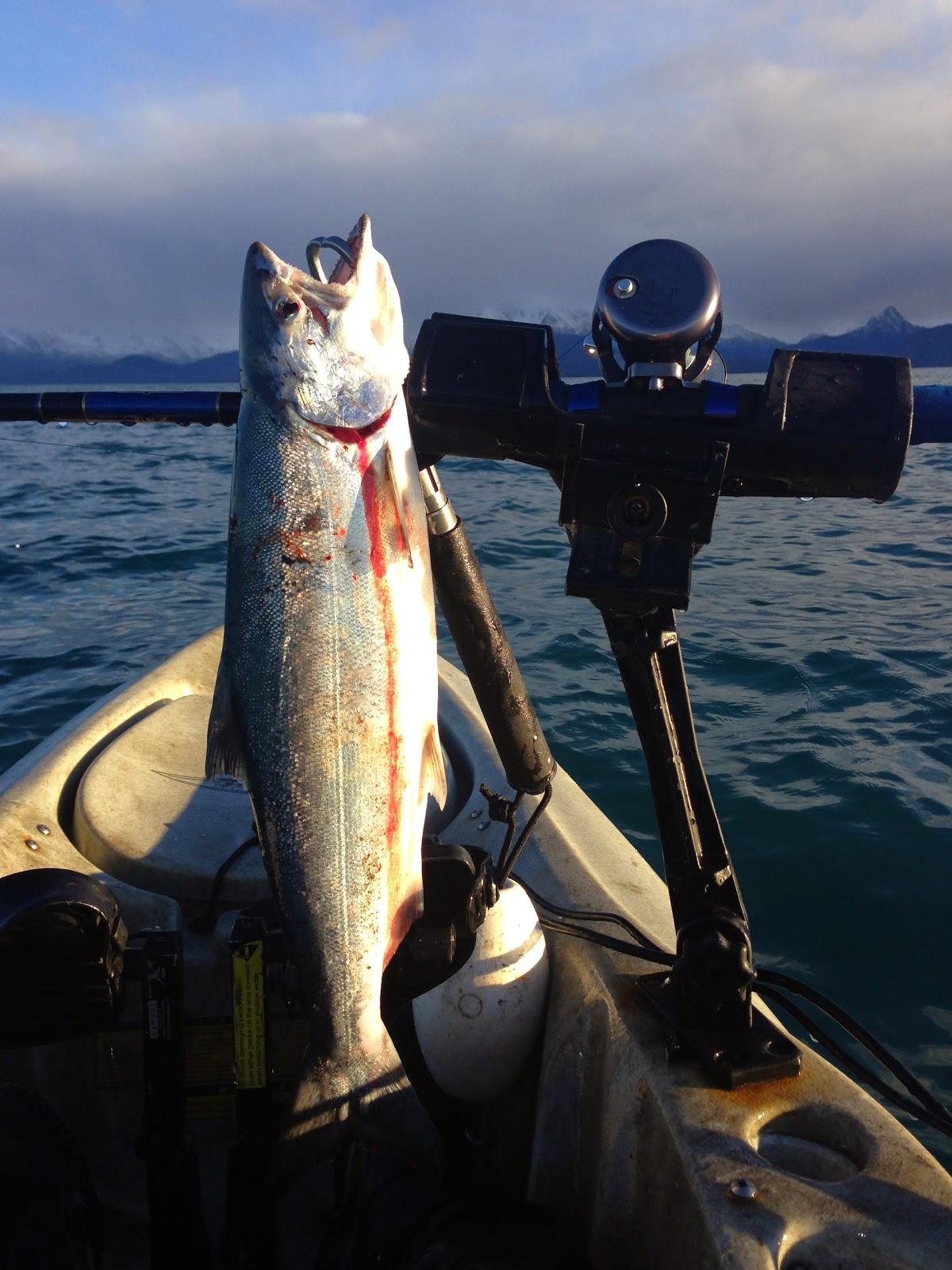 Southcentral alaska sport fish regulations alaska autos post for Alaska fishing license