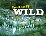 Born to Be Wild  June 26 2013