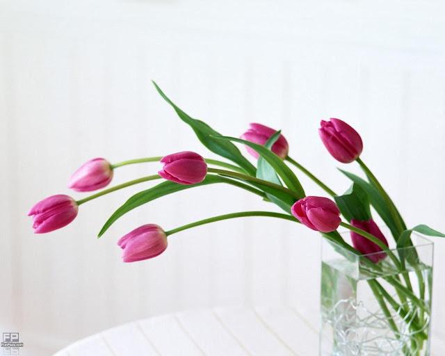 Flowers HD Desktop Wallpaper