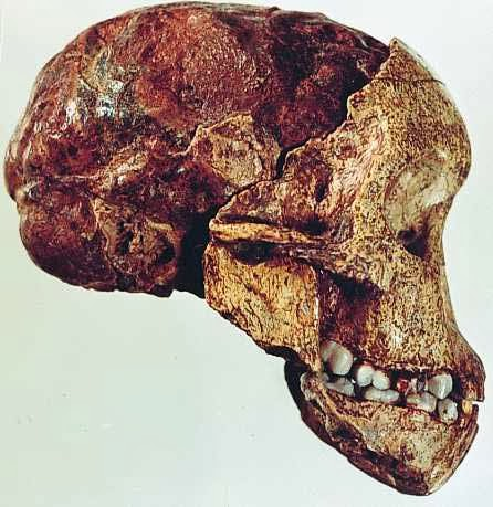 Radiocarbon dating inaccuracies-in-Blenheim