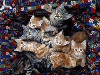 kucing comel7 Gelagat Si Comel