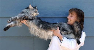 World's Longest Cat Stewie in US
