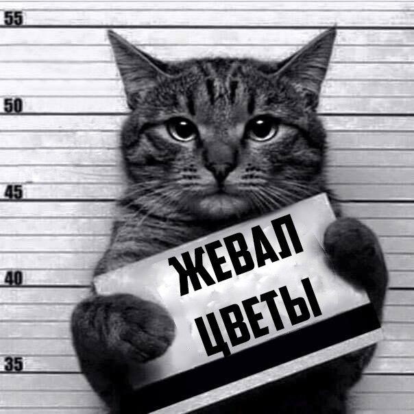 Все преступления котов (8 фото)