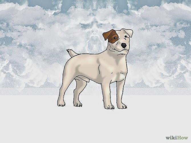 Comece por compreender o valor do contato visual cão