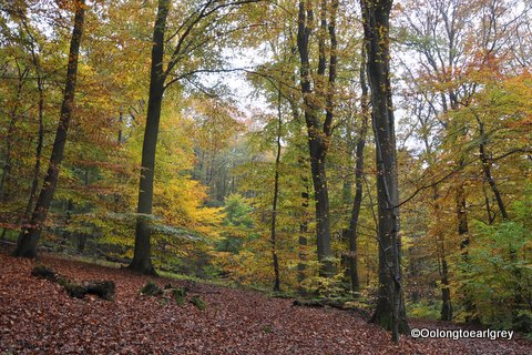 Forest, Frankfurt, Germany