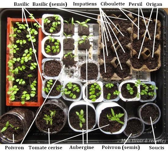 semis serre chauffante
