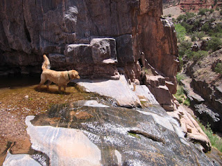 Scout at the Dominguez Canyon waterfall