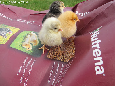 Nutrena Chicken Feed Giveaway at www.The-Chicken-Chick.com