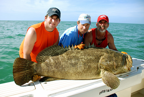 Goliath grouper life of sea for Grouper fishing florida