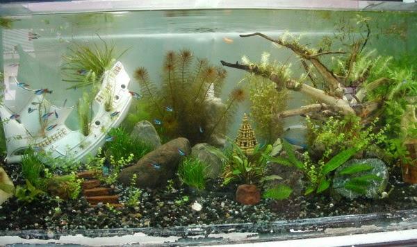 Aquari yus galeri aquascape bogor - Gambar aquascape ...
