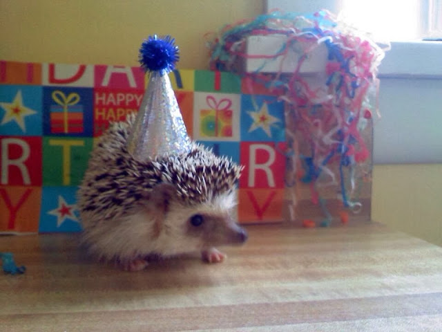 Funny animals of the week - 13 December 2013 (40 pics), hedgehog wears birthday hat