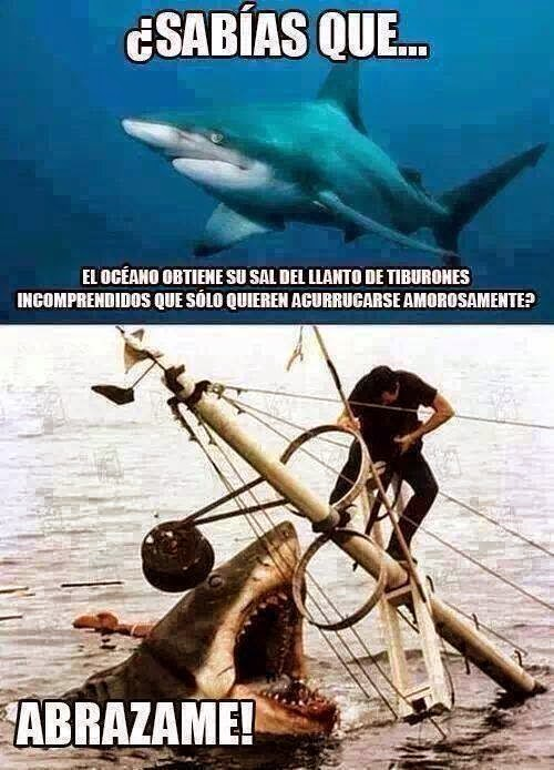 Curiosidades de tiburones: ¿Sabias que...?