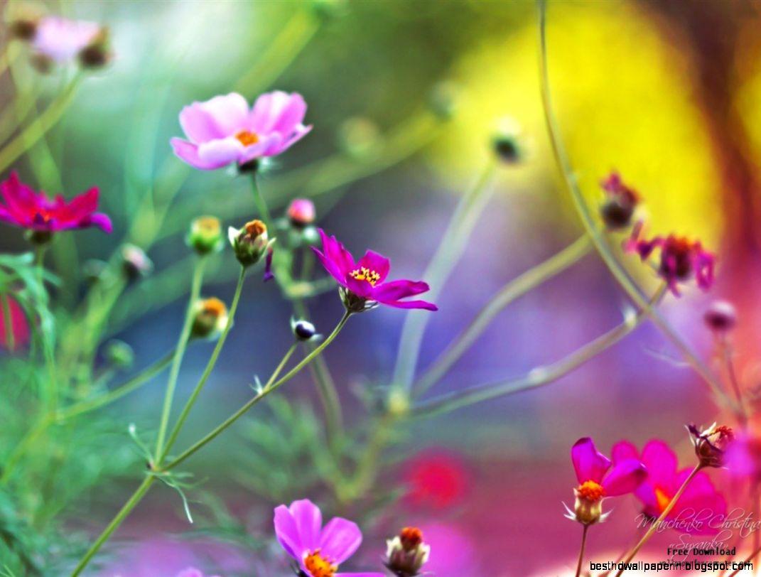 Beautiful macro flowers photography best hd wallpapers view original size beautiful flower photography izmirmasajfo