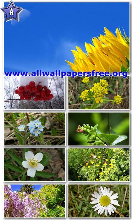 30 Beautiful Flowers HD Wallpapers 1366 X 768 [Set 7]