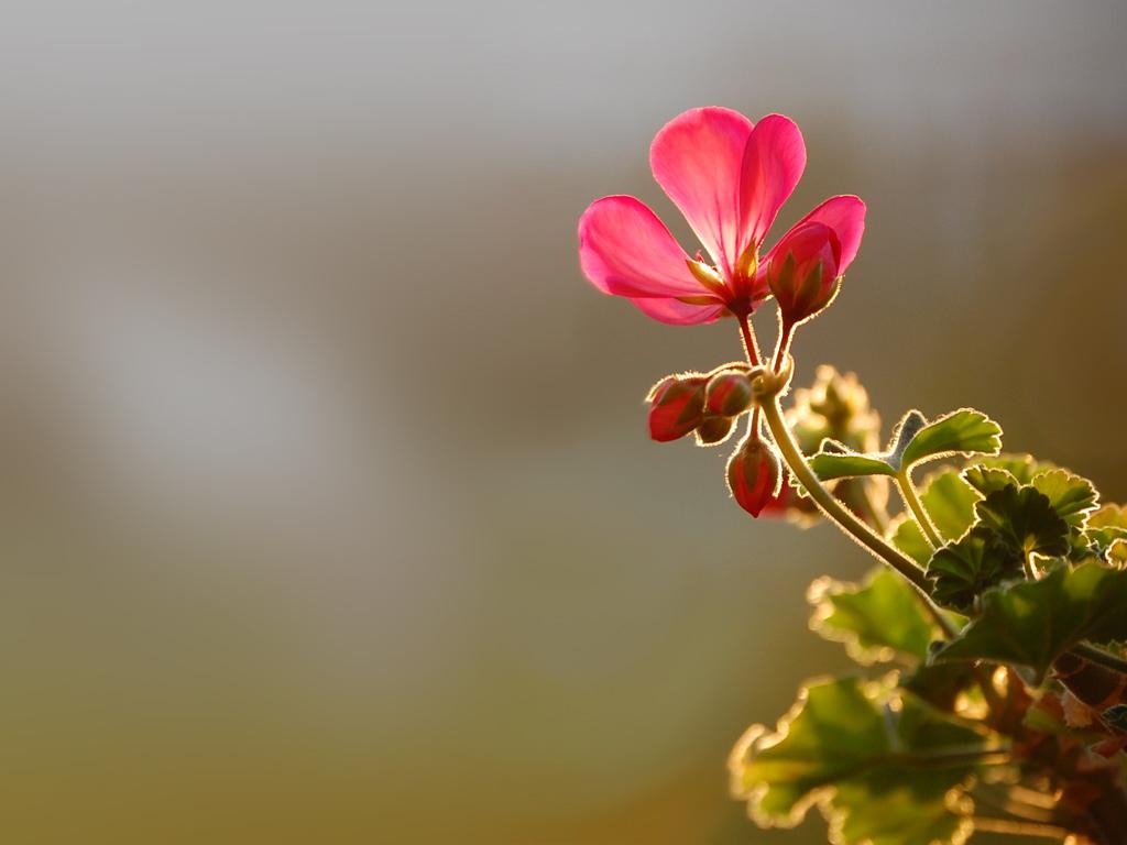 http://3.bp.blogspot.com/-UhKd-vGDZGw/TxJG1ORSsXI/AAAAAAAAAIc/na5q9YnKlBs/s1600/Wallpaper-Flower.jpg