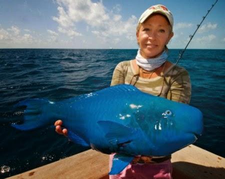 Ikan Parrot Biru