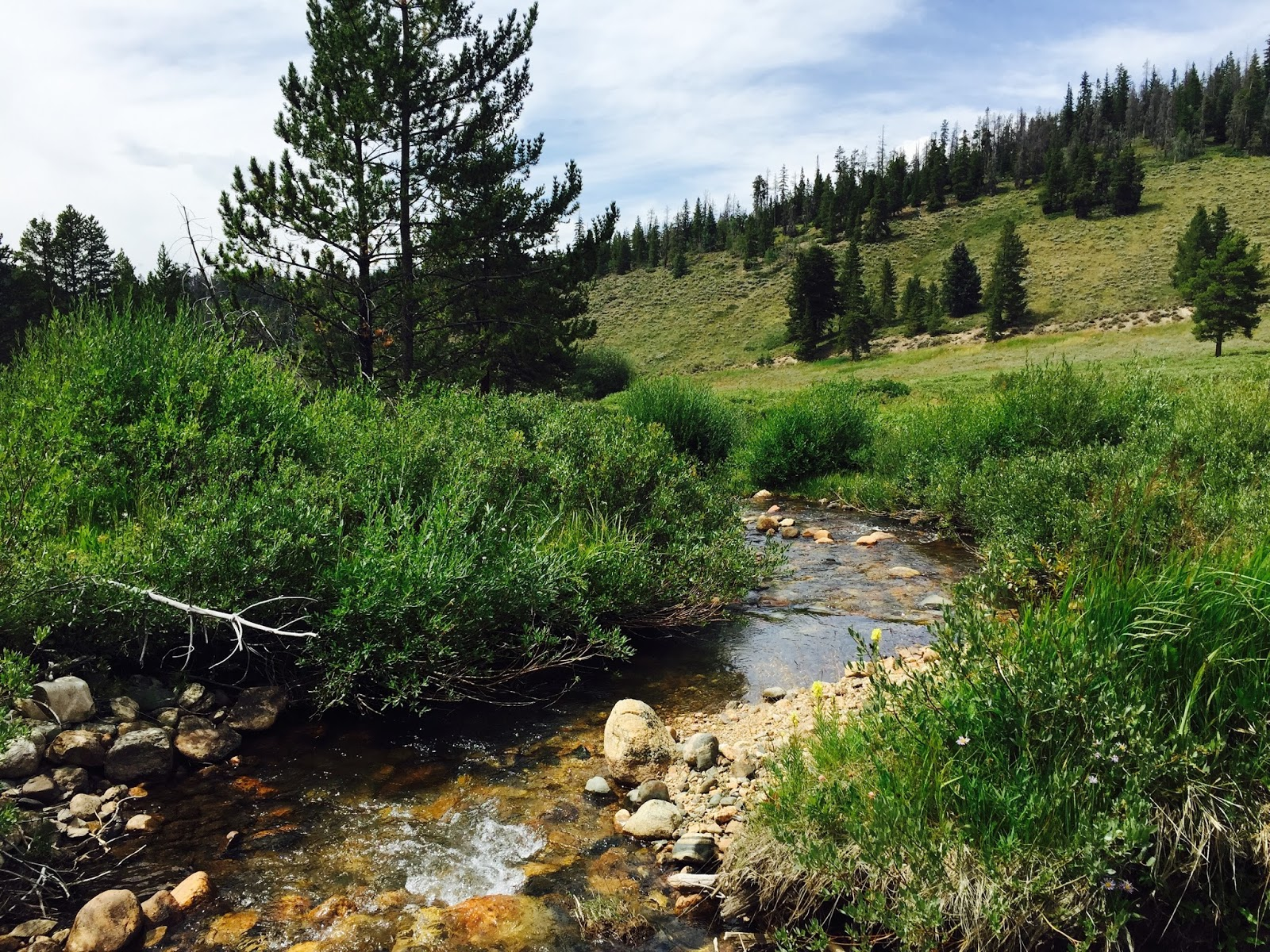 Fly fishing with brent cannon swan creek breckenridge co for Breckenridge co fishing