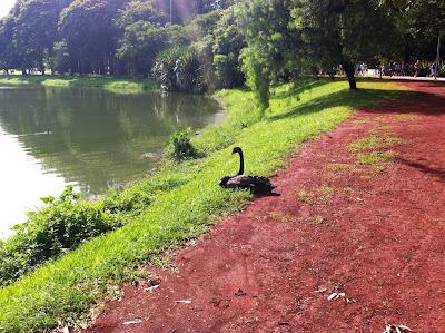 Parque de Ibirapuera