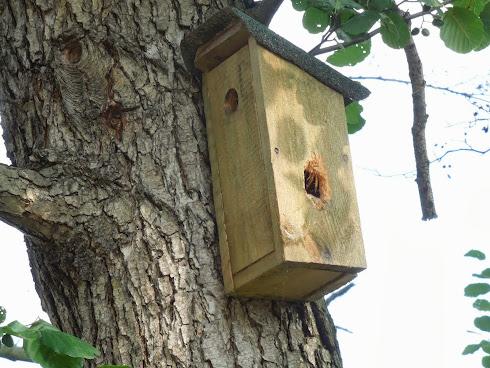 Ptačí přestavba domova