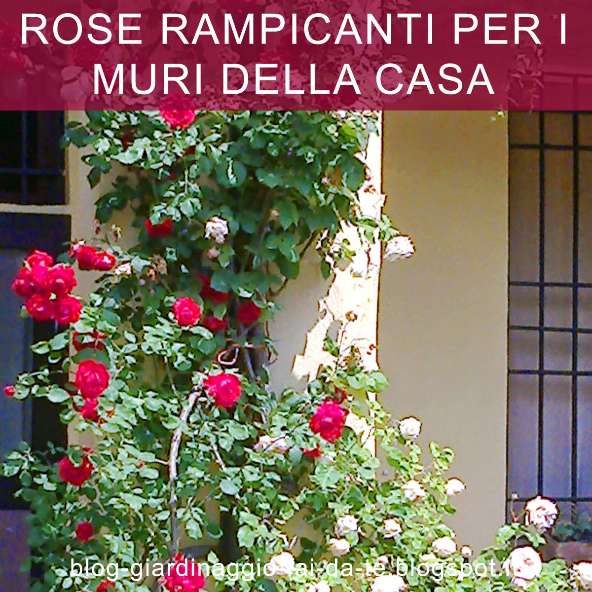 Blog the first blog last posts - Rose coltivazione in giardino ...