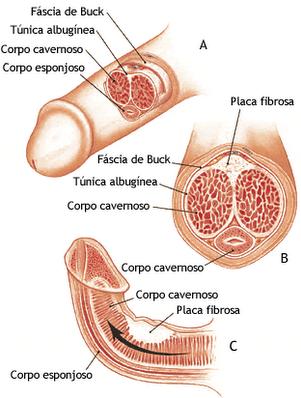 penetracion femenina