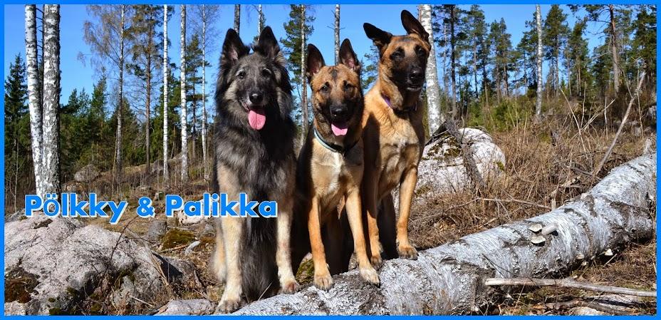 Pölkky & Palikka