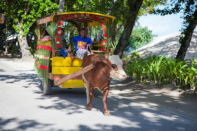 Ochsenkarre für eine Hochzeit geschmückt, LaPasse