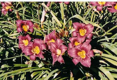 Flori din Gradina Botanica din Montreal, de la Adina Mariasiu
