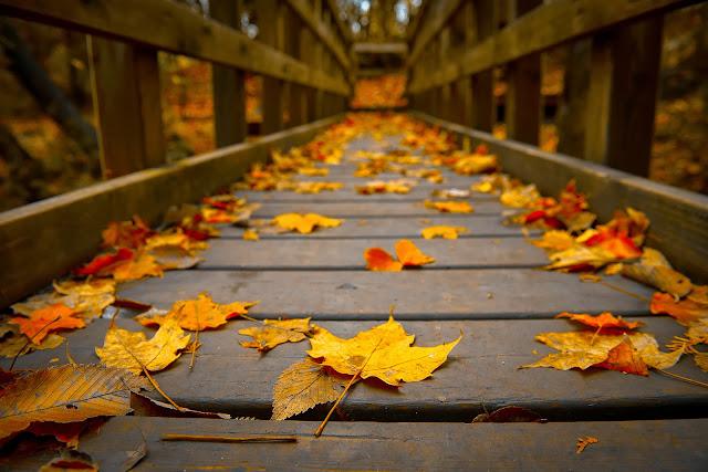 ... Y caen las hojas, llega ....¡¡¡ EL Otoño !!! - Página 9 Sigo+mi+camino