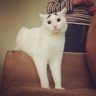 Katze mit Augenbrauen