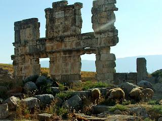 Apamea: un sito in balia delle pecore.