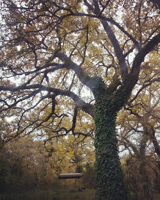 The heavenly swings at la Selva